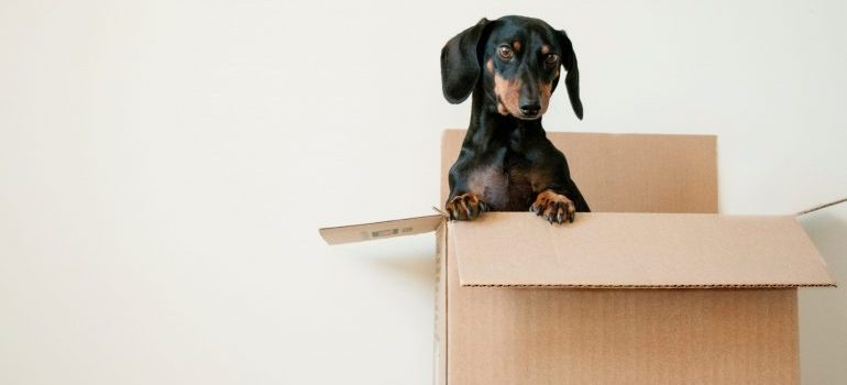 black and brown dog sitting in a box