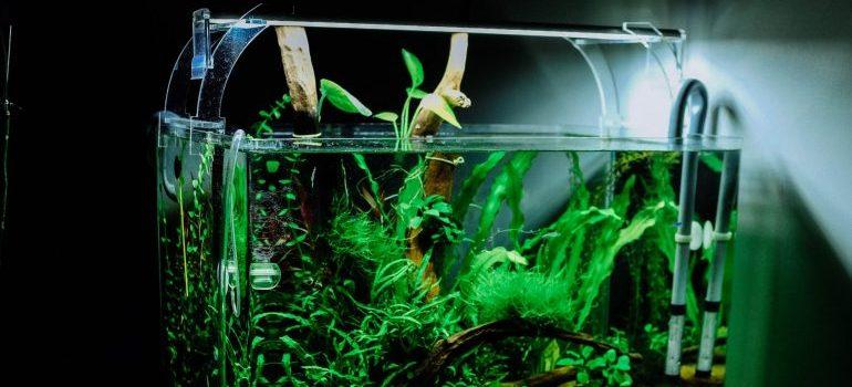 fish aquarium in a dark room