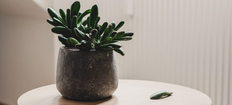 small succulent plant on a table