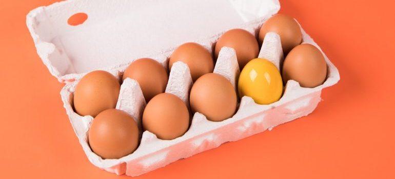 Egg carton.