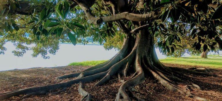 Gray trunk green leaf tree beside of water
