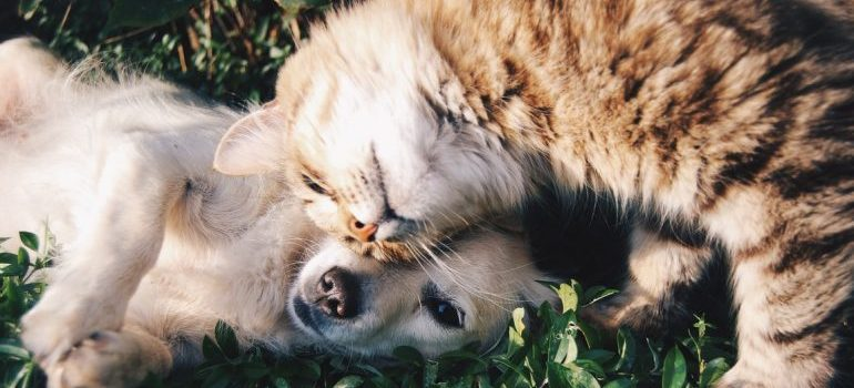 A cat and a dog