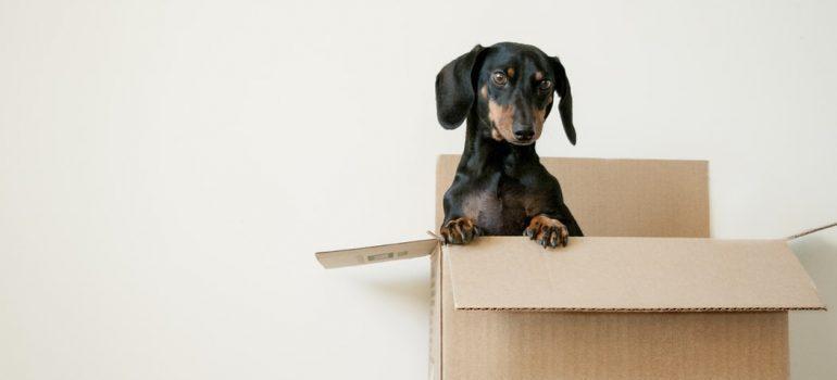 A dog in a box